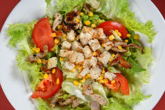 Chicken salad with dried bread Stock Photography