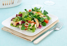 Chicken salad on white plate Stock Image
