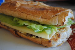 Chicken sandwich. Close up of sandwich baguette, cheese and lettuce Royalty Free Stock Images