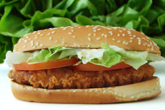 Chicken sandwich royalty free stock photo
