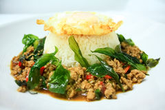 Chicken sauteed with garlic and hot basil Stock Photo