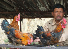 Chicken seller in Nepal Stock Images