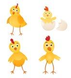 Chicken set Royalty Free Stock Photo
