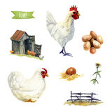 Chicken set, clipping paths included. Chicken, hand-painted watercolor set, clipping paths included vector illustration