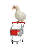 Chicken with shopping cart Stock Images