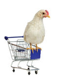 Chicken sits on shopping cart Royalty Free Stock Image