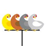 Chicken sitting on perch. Birds at farm are sitting on Bird perc Royalty Free Stock Photos