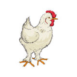Chicken sketch animal farm icon. Vector graphic Royalty Free Stock Photo