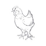 Chicken sketch animal farm icon. Vector graphic Stock Photos
