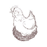 Chicken sketch animal farm icon. Vector graphic Royalty Free Stock Photography