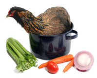 Chicken Soup. A rather perturbed chicken in a roasting pot, surrounded by vegetables. Isolated for easy design use Stock Photo