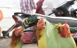 Chicken souvenirs on ferry to Saigon stock photography