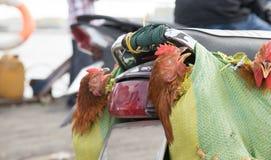 Chicken souvenirs on ferry to Saigon stock image