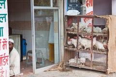 Chicken Stack Stock Photos