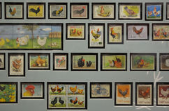 Chicken stamps collectibles exhibits. A photo taken on some chicken stamps collectibles exhibits at the Singapore Philatelic museum Royalty Free Stock Photography