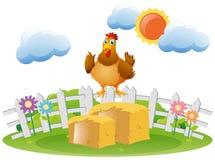 Chicken standing on haystack Stock Photos