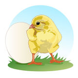 Chicken stands in front of the whole egg. Little fluffy chick. Vector. Chicken baby stands in front of the whole egg. Little fluffy chick. Vector Stock Photography