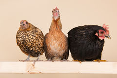 Chicken on stick. Three different chicken on stick in studio Royalty Free Stock Images