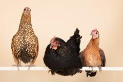 Chicken on stick Stock Photo