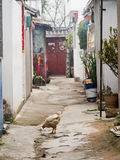 Chicken on Street of Old Town Dali China Royalty Free Stock Photo