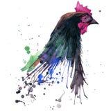 Chicken T-shirt graphics, breeding hens illustration with splash watercolor textured background. illustration watercolor breeding Stock Photo