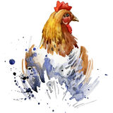 Chicken T-shirt graphics, breeding hens illustration with splash watercolor textured background. illustration watercolor breeding Royalty Free Stock Image