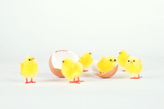 Chicken toy and egg shell isolated on white Royalty Free Stock Photos