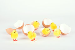 Chicken toy and egg shell  on white Royalty Free Stock Photo