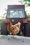 Chicken and a tractor Royalty Free Stock Photography