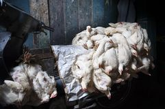Chicken Transport in Jakarta. Carrier full of chickens tied together for transport Stock Images