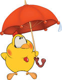 Chicken and an umbrella cartoon Royalty Free Stock Photography
