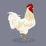 Chicken vector. Stock Image