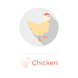 Chicken vector illustration. In flat design style with long shadow. Round shape, isolated on white background. Thin line icon included royalty free illustration