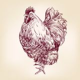 Chicken vintage hand drawn vector illustration Royalty Free Stock Photography