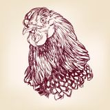 Chicken vintage hand drawn vector Royalty Free Stock Photography