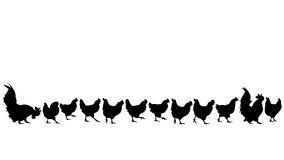 Chicken walking silhouettes Stock Photo