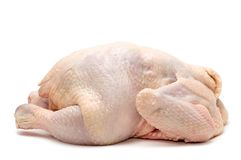 Chicken on white background Royalty Free Stock Photo