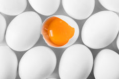 Chicken white eggs closeup Stock Image