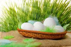 Chicken white eggs with feathers in basket on hessian and spring Stock Image
