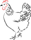 Chicken Stock Photos
