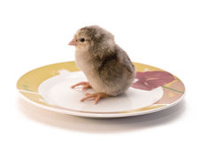 The chicken in a white saucer Royalty Free Stock Photography