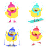 Chicken and winter sports  Snowboarding, skating, skiing. Vector Stock Photography