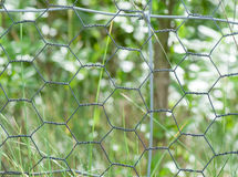 Chicken Wire Fence Royalty Free Stock Images