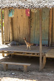 Chicken on a wood house entrance in Madagascar Stock Image