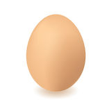 Chickend egg Stock Image