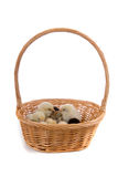 Chickens in the basket Stock Photography
