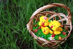 Chickens in a basket on a grass Stock Photography
