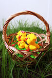 Chickens in a basket on a grass Royalty Free Stock Photos