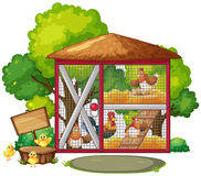 Chickens in big coop Stock Photos