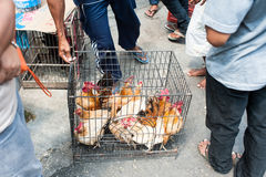Chickens in a cage at a bird market in Java, Indonesia Royalty Free Stock Photos